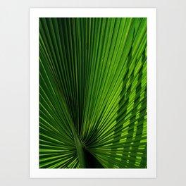 Palm Leves Art Print