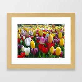 Colorful Springtime Tulips in the Netherlands Framed Art Print