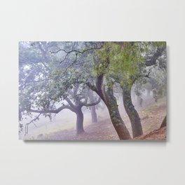 Cork oaks. Foggy sunrise at the mountains Metal Print