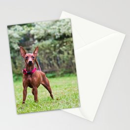 Outdoor portrait of a red miniature pinscher dog Stationery Cards