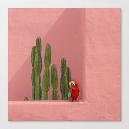 Macaw in Mexico Canvas Print