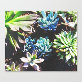 So many succulents, so little time. Canvas Print