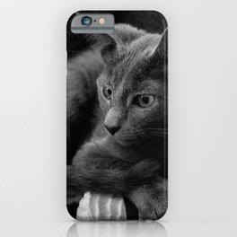 Russian Blue Kitten Portrait 2 iPhone Case