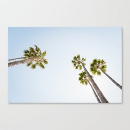Palm Trees 4 Canvas Print