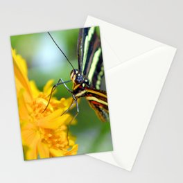 The Zebra Longwing Stationery Cards