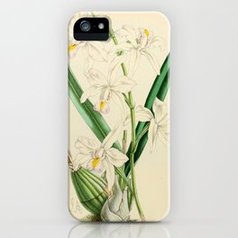 Laelia Albida var Rosea iPhone Case