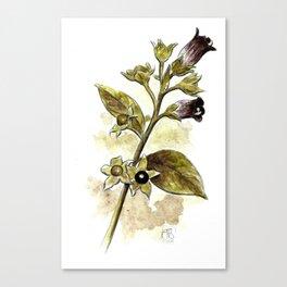 Atropa Belladonna Canvas Print