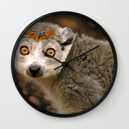 Female Crowned Lemur Wall Clock