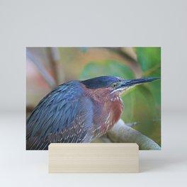The Green Heron at Ding I Mini Art Print