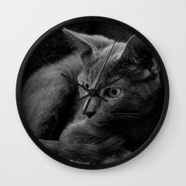 Russian Blue Kitten Portrait 2 Wall Clock