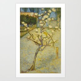 Small Pear Tree in Blossom Art Print