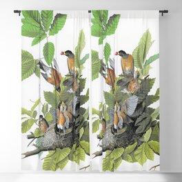 15,000px,600dpi-John James Audubon - American Robin - Digital Remastered Edition Blackout Curtain