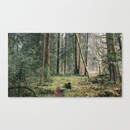 Forest Floors Canvas Print