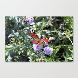 Sweet butterfly Canvas Print