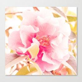 camellia I Canvas Print