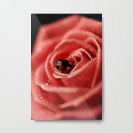 Red rose with black ladybug Metal Print