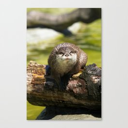 Otter on A Tree Trunk Canvas Print