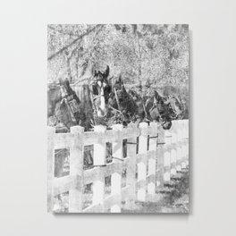 A Line of Amish Horses Metal Print