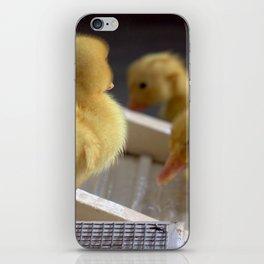 Baby Ducks in Water iPhone Skin