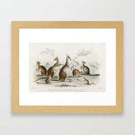 Collection of Kangaroos by Oliver Goldsmith Framed Art Print