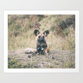 Art Print / African Wild Dog Portrait Art Print
