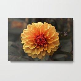 Flower Portrait - Fire Flower Metal Print
