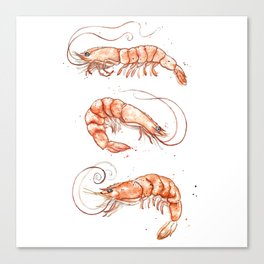 Shrimps 2014 Canvas Print