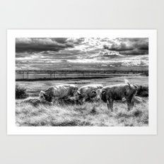 Late Afternoon Cows Art Print