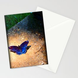 Blue Butterfly Photo Art Fine Art Mud Puddling Red Spotted Purple  Stationery Cards