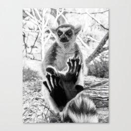 Lemur. Cool. Canvas Print