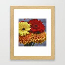 Colorful Germini Framed Art Print
