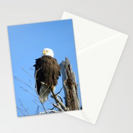 Bald Eagle - Closeup in Tree Stationery Cards