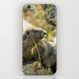 Marmot on Naches Peak iPhone Skin