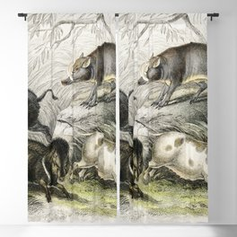 Wild Boar Collared Peccary Chinese Sow Capibara and Babyroussa from A history of the earth and anima Blackout Curtain