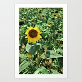 Flower No 6 Art Print