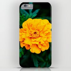 Tangerine Beauty Slim Case iPhone 6 Plus