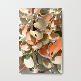 Succulent in hues of pink, orange and green.  Hot house plant Metal Print