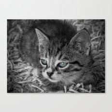 Baby Kitten Canvas Print