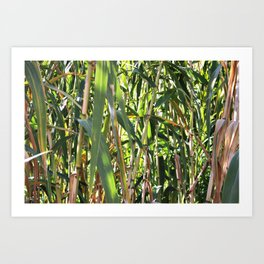 Tall grass Art Print