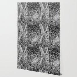 Strangler fig and boulder in the rain forest Wallpaper