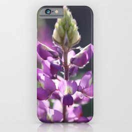 The Canyon Keeper iPhone Case