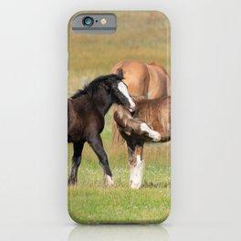 Gypsy Vanner Foals 0371 - Colorado iPhone Case