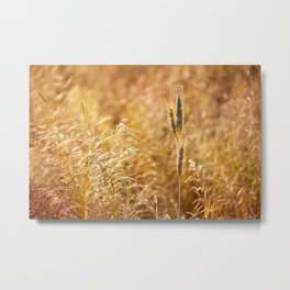 Golden cereal plant photo Metal Print