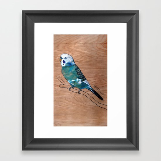 Budgerigar Framed Art Print