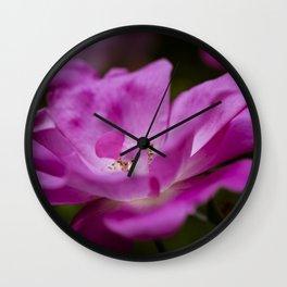 Fuchsia rose Wall Clock