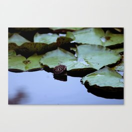 Lotus Seed Pod with Lily Pads Canvas Print