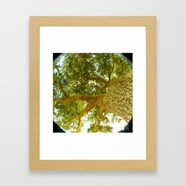 treeshade Framed Art Print