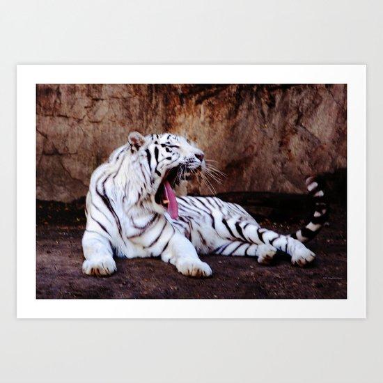 Tiger Yawn Art Print