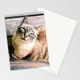 Kool Kitty Stationery Cards