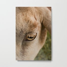 Window to a goat's soul  Metal Print